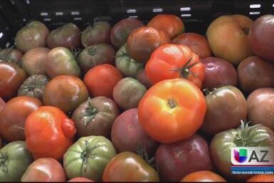 Tomates hidropónicos
