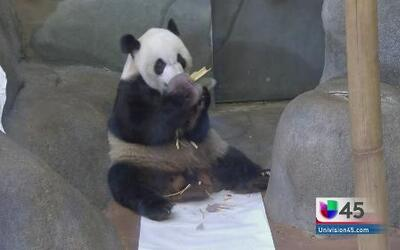 """Osito Panda celebra su """"Sweet 16"""""""