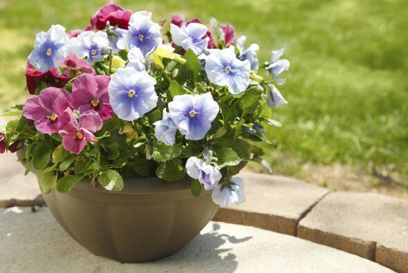 1) Pensamientos. Celeste Longacre, jardinera y autora del libro Celeste'...
