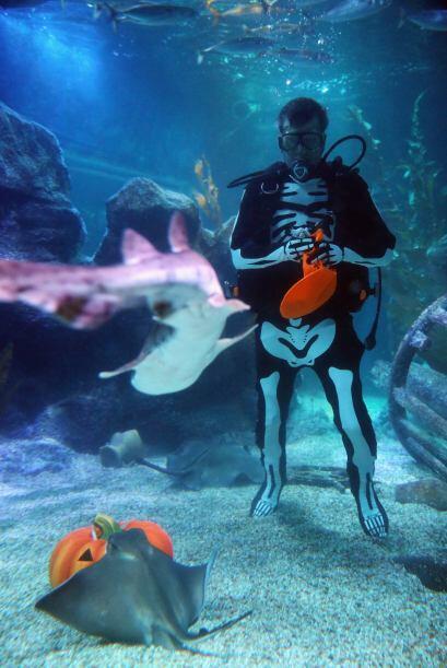 Pero qué valentía para llevar al fondo del acuario una calabaza. Seguro...