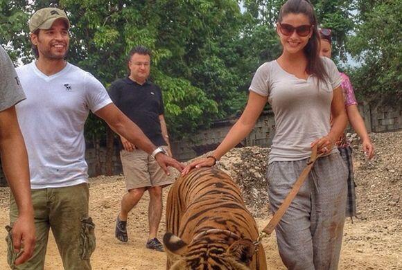Después de darles de comer, pasear, acariciar y bañar a los tigres, Ana...