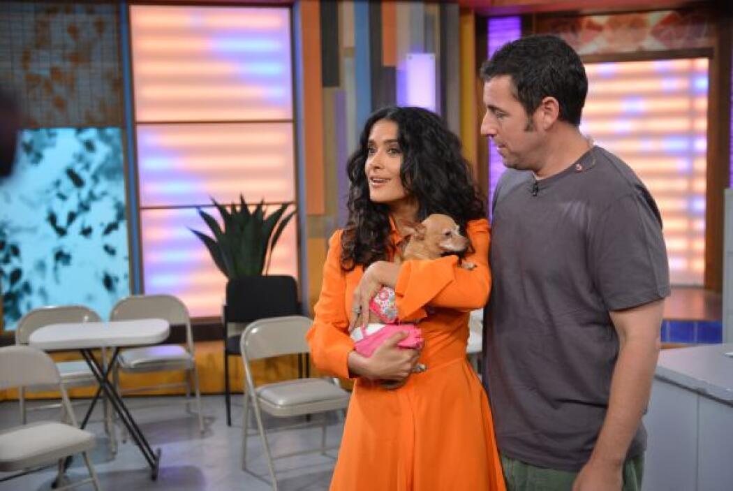 Salma Hayek se enamoró de Honey. ¡La mascota de Despierta América tuvo m...