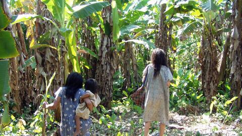 Según un estudio publicado por The Lancet, los Tsimane son la población...
