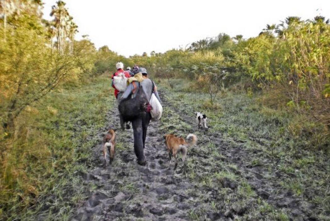 El coordinador ejecutivo de Tierraviva, Oscar Ayala, dijo a la agencia d...
