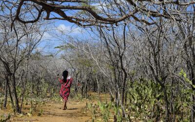 Una mujer wayúu camina a lo largo del paisaje reseco. Los modelos...