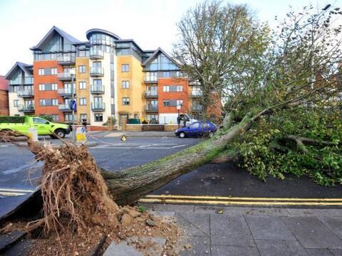 Dos personas murieron este lunes tras caerles encima sendos árbol...
