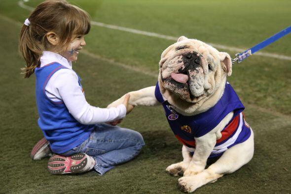 Bulldog: Los hay de dos tipos, inglés y francés y, pese a su apariencia,...