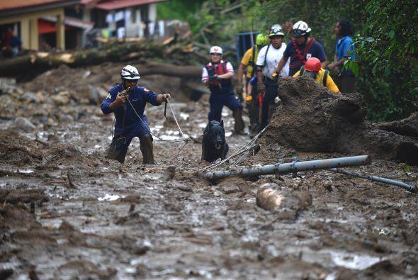 Mientras los socorristas continúan revisando entre los escombros de vivi...
