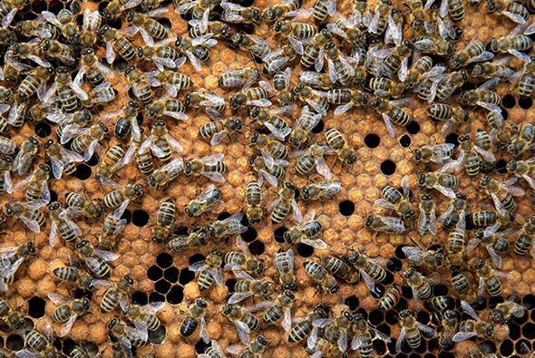 Los seres humanos veneran a las abejas por muchas razones, por su capaci...