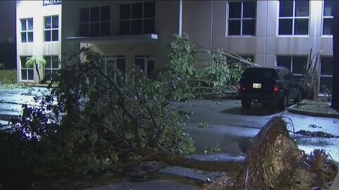 Vientos asociados a la alerta de tornado causa estragos y caída de árbol...