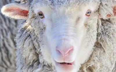 Imágenes de Impacto: denuncian crueldad animal en Colorado contra unas o...
