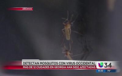 Más de 12 ciudades afectadas por mosquitos con virus del Nilo Occidental