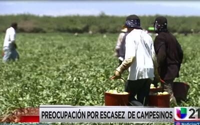 Preocupación por escasez  de campesinos