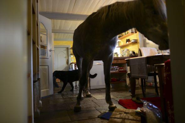 Nasar es la mascota más grande de la casa, pero no es el ú...