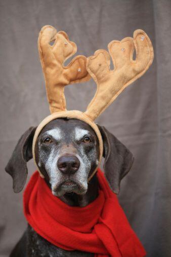Como es de esperarse, debes tener más cuidado si tu mascota es un cachor...