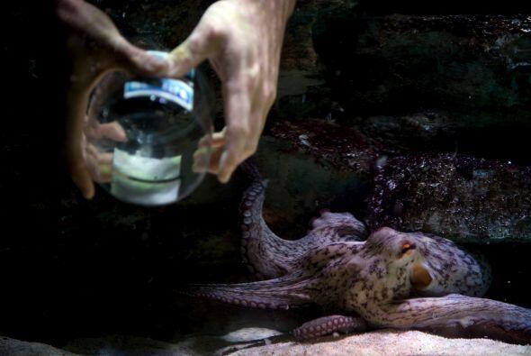 La gente del acuario no desaprovechó la oportunidad y le prepararon tres...