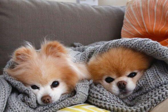 Cuando tienen frío se acurrucan de una manera muy linda.