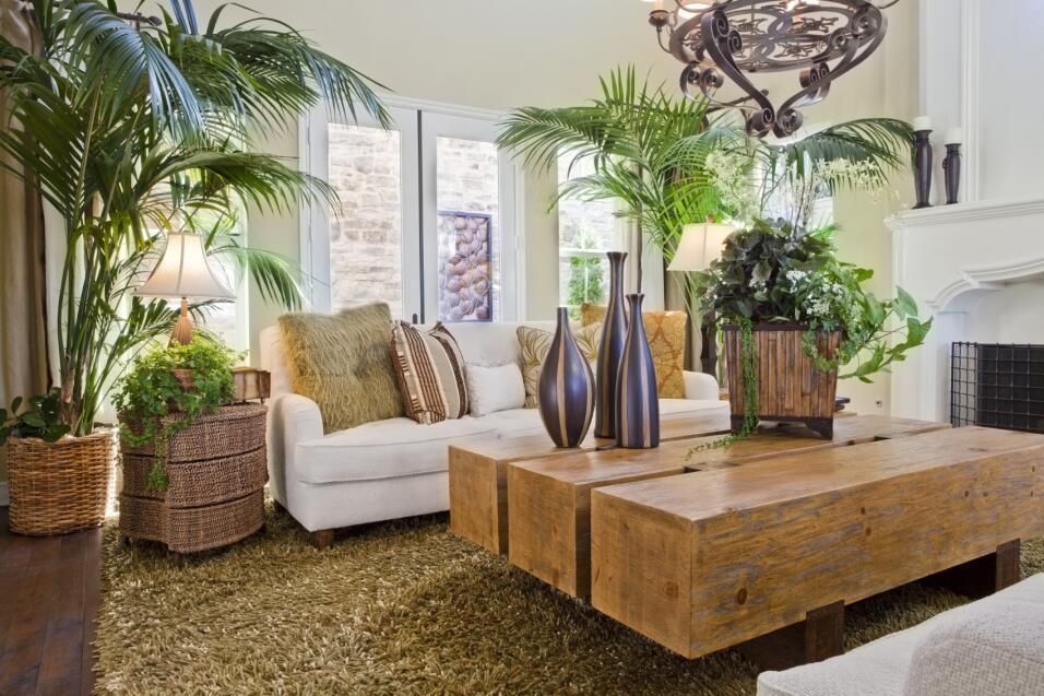 Decoraci n con plantas de interior univision - Decoracion plantas interior ...