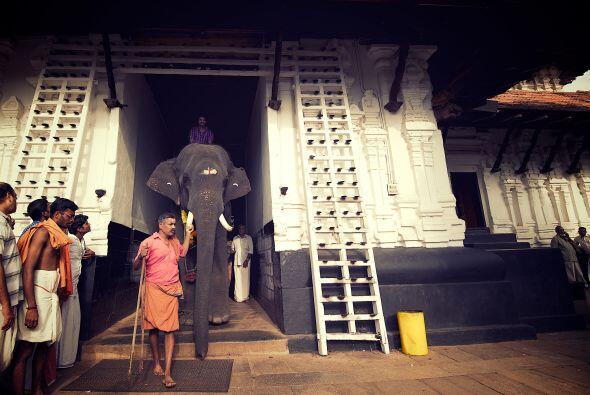 Los elefantes son considerados animales sagrados para la cultura y la re...