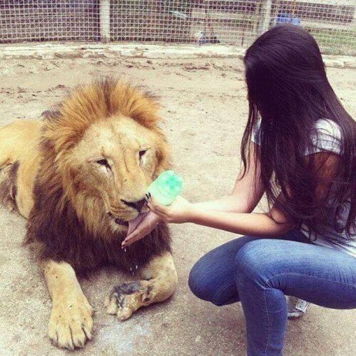 Bajó la cita de LA PLEBE. Esta imagen del 22 de julio muestra a un león...