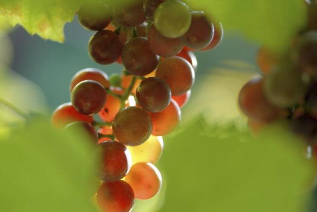 En cuanto a las uvas, éstas tienen un azúcar especial dextrosa y puede p...