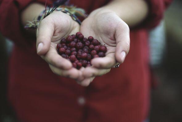 Arándanos. Estas bayas contienen grandes cantidades de antioxidantes, po...