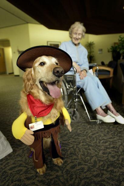 Seguridad  de las mascotas. Las mascotas, sobre todo los perros, podr&ia...