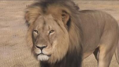 cecil leon africano