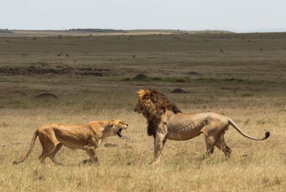 """Añadió: """"Las expresiones del león fueron graciosas..."""