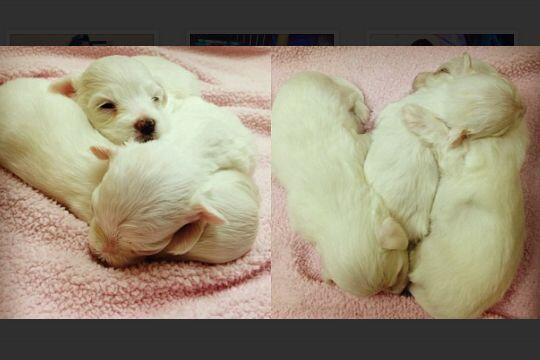 A los pocos días de nacidos tuvieron su primera visita al veterinario.