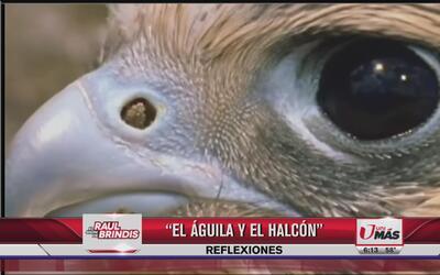 Reflexión: El águila y el halcón