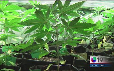 Aumenta el interés de los californianos por aprender sobre el cultivo de...