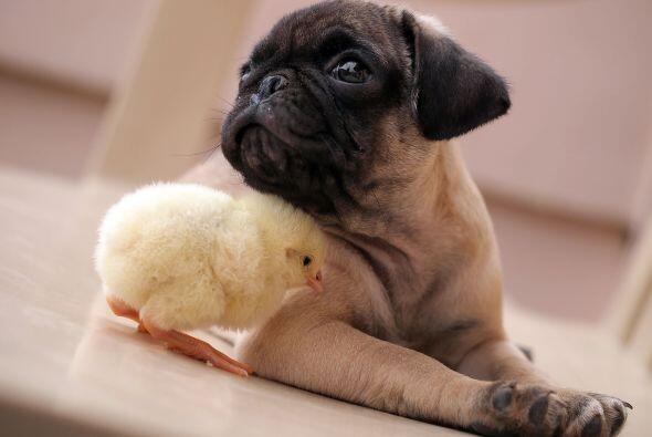 El dormilón perrito se llama Fugly y le encanta posar ante la c&a...