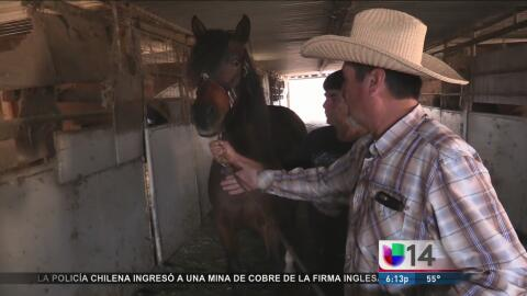Más de 100 caballos están en riesgo de quedar en la calle en Richmond
