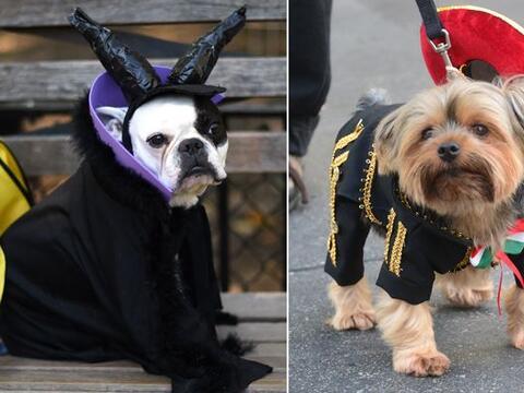 Estos canes nos dieron una muestra de que Halloween es el momento perfec...