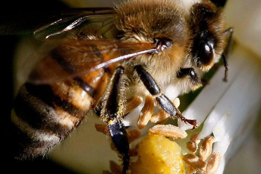 Según confiesa el doctor Juan, cuando ve una abeja lo primero que piensa...