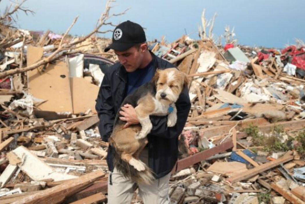 Sean Xuereb abraza a un perrito perdido entre los escombros. Muchas masc...