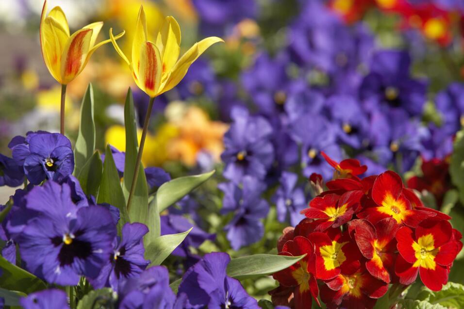 Así que ¡manos a la obra!, ábrele las puertas de par en par a la primavera.