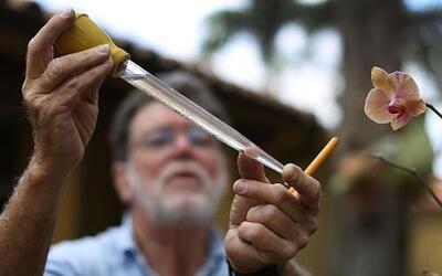 Los cuatro pacientes de Florida serían los primeros casos locales de zik...