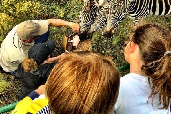 De safari con sus peques.