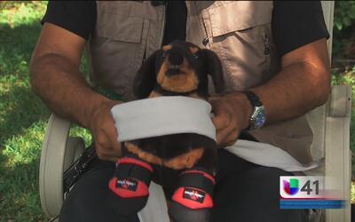 ¿Cómo proteger a tus mascotas de los fuegos artificiales?