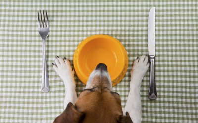 Nutre a tu perro con mucha diversión