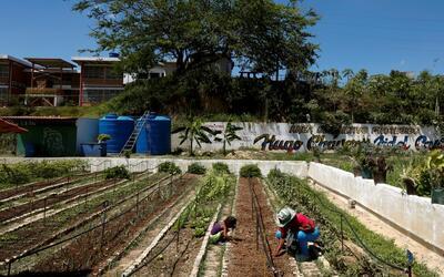 Venezolanos recurren a los huertos urbanos ante la escasez