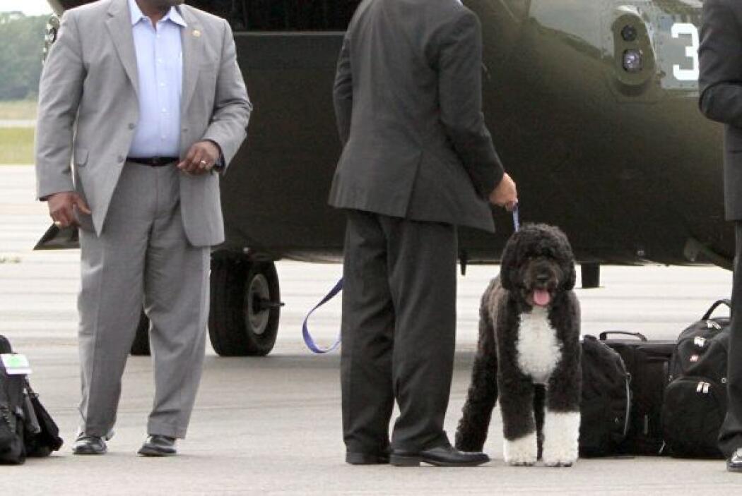 Bo, la mascota de la familia, también fue de vacaciones ellos.
