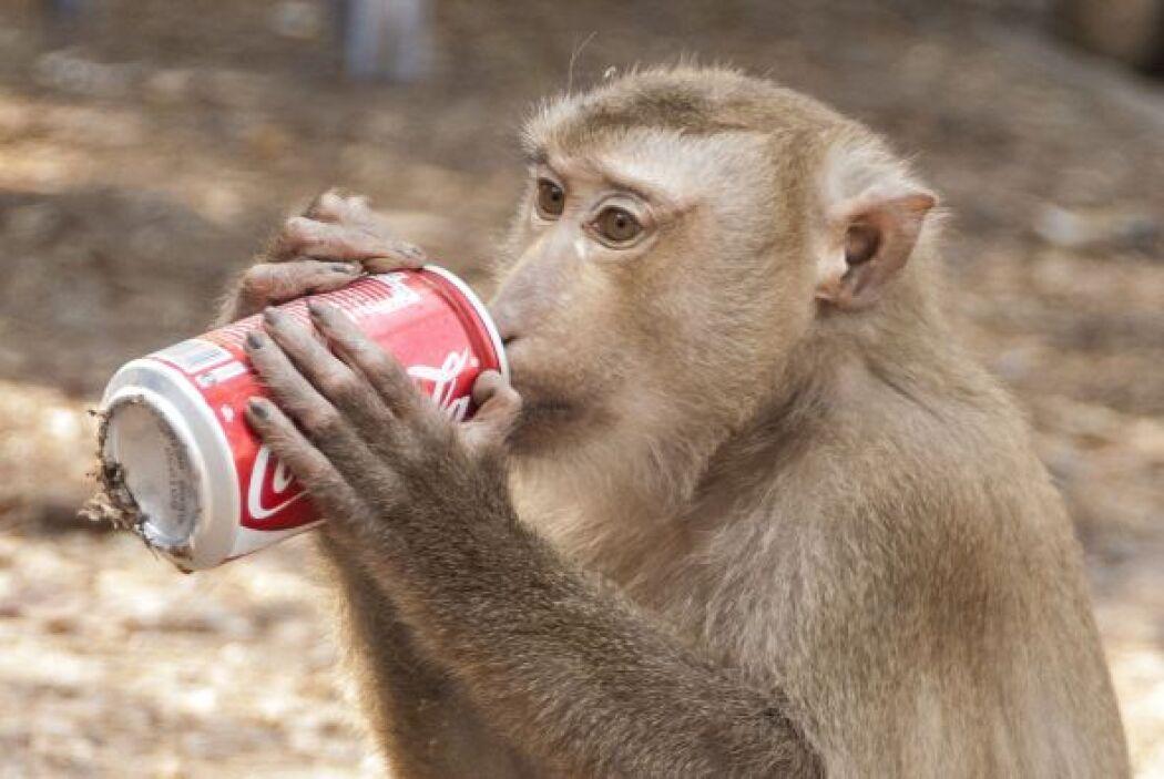 Y como este mono sabe que cuando la sed ataca, cualquier cosa es buena,...