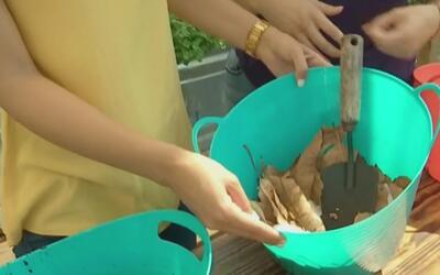 La composta, una opción para reducir los desechos y contribuir a la pres...