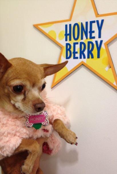 A Honey le dieron la bienvenida como toda una estrella.