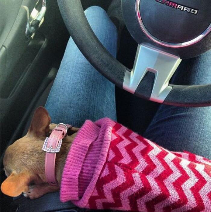 Lo único que quiere es estar al lado de su madre así sea en el volante p...