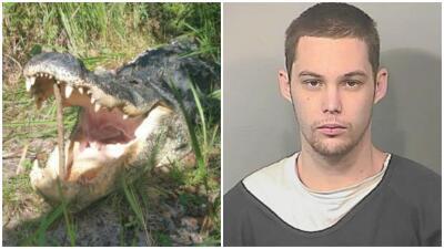 Caimán ataca hombre en Florida