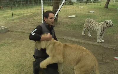 El santuario de felinos más grande del mundo está en México